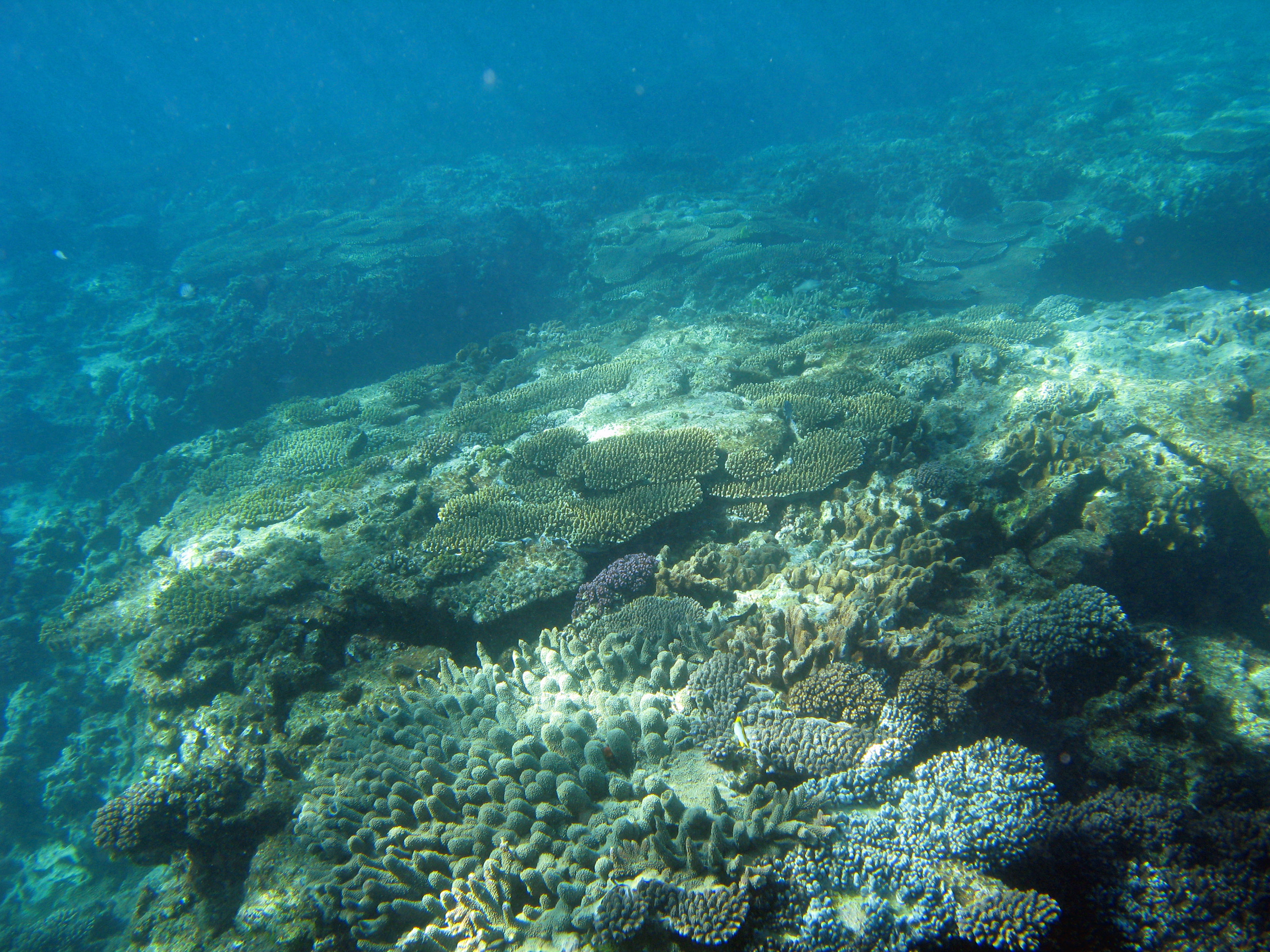 Coral landscape 2392 stockarch free stock photos for Ocean floor description