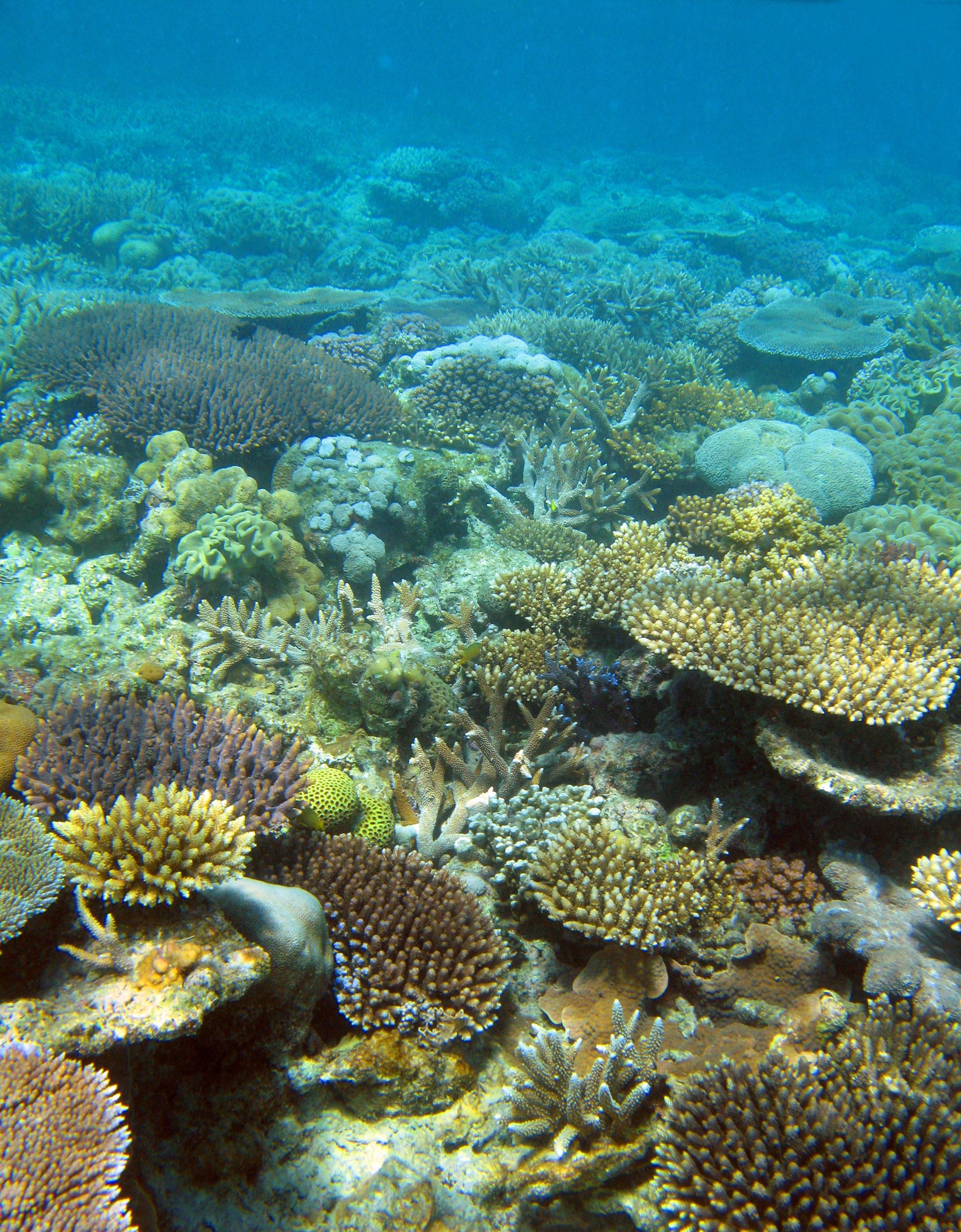 nature coral underwater landscape - photo #6