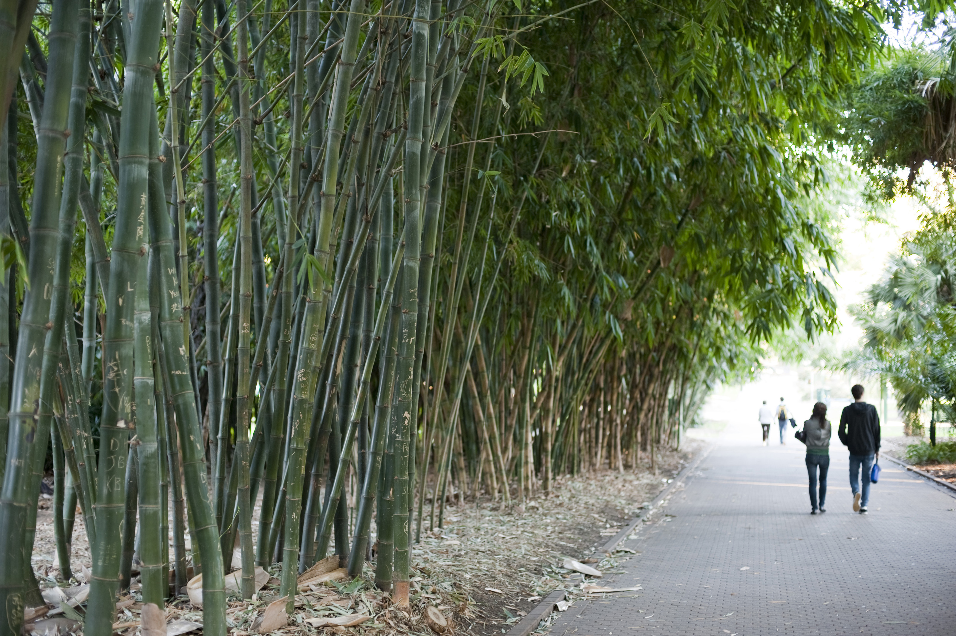 walkway through bamboo plantation 4259 stockarch free stock photos. Black Bedroom Furniture Sets. Home Design Ideas