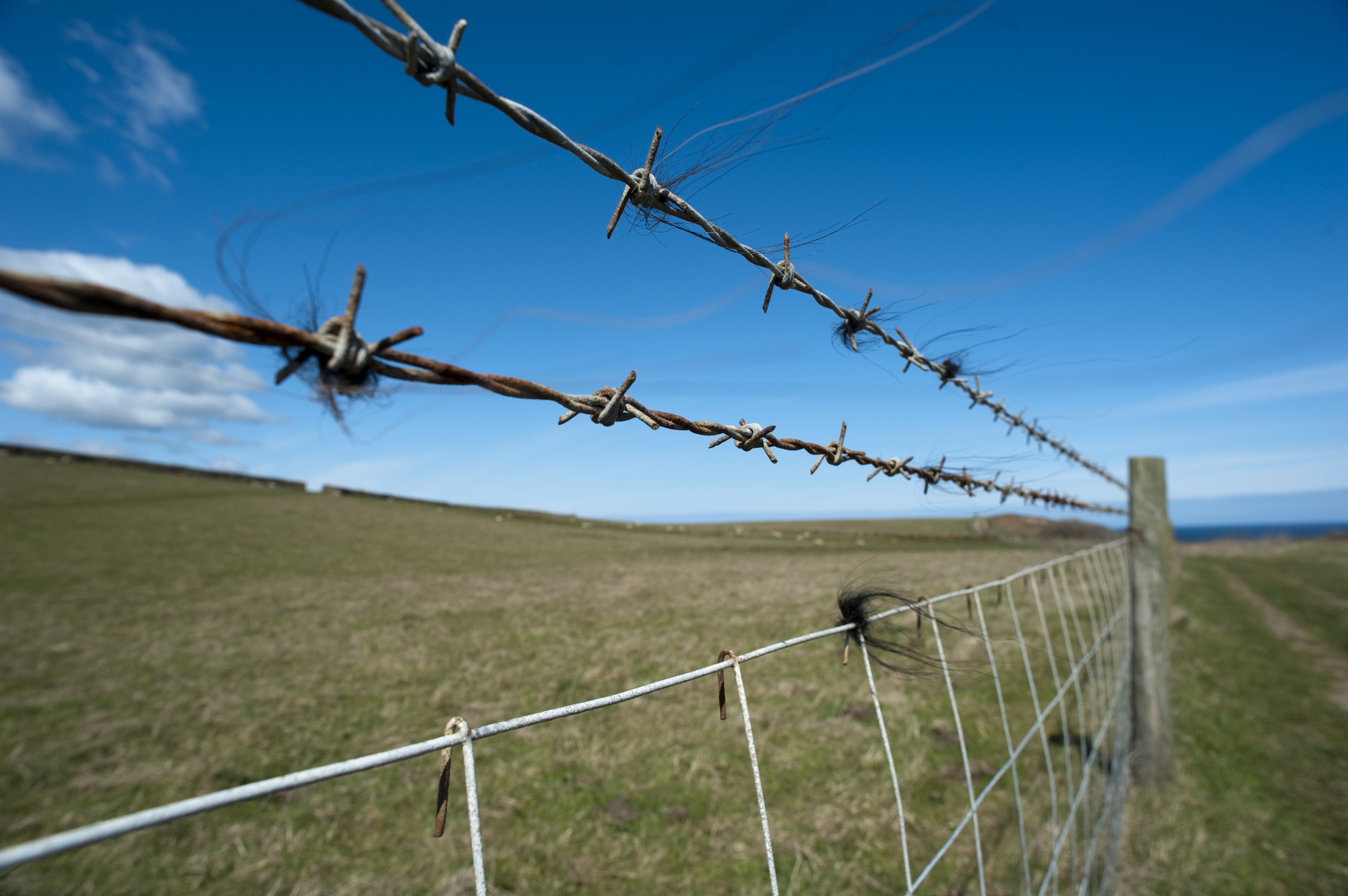 Barb wire strands-4275 | Stockarch Free Stock Photos