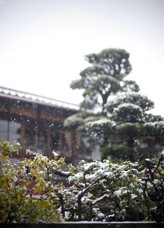 snow falling on a japanese garden 5377 stockarch free stock photos