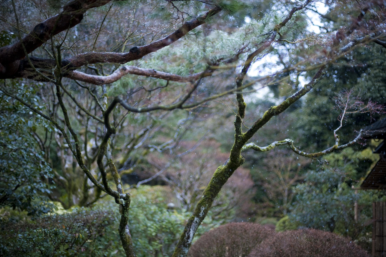 Cold winter garden 5365 stockarch free stock photos for Zen garden trees