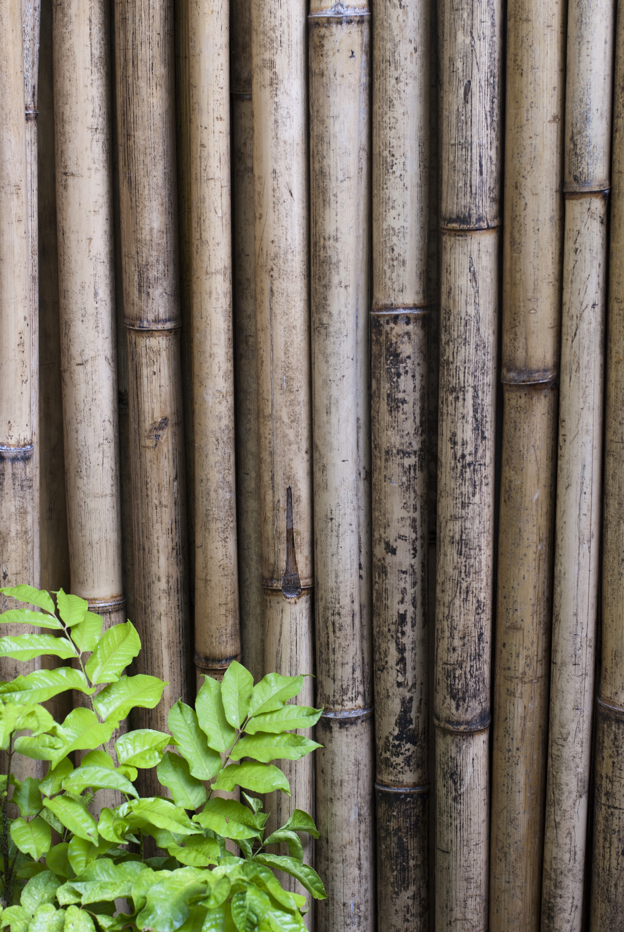 Dried Bamboo Fencing 5976 Stockarch Free Stock Photos