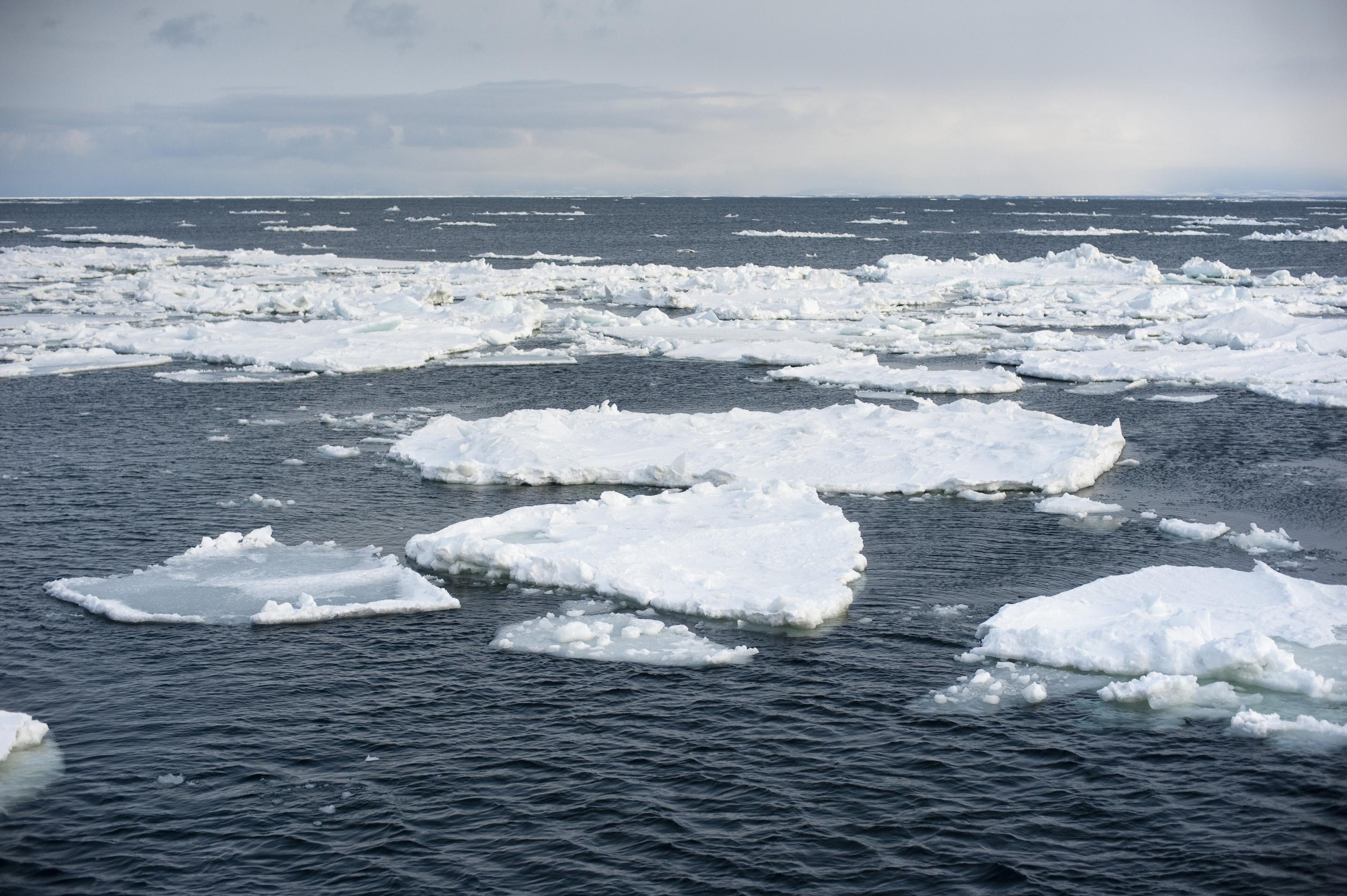 arctic ocean abiotic vs biotic