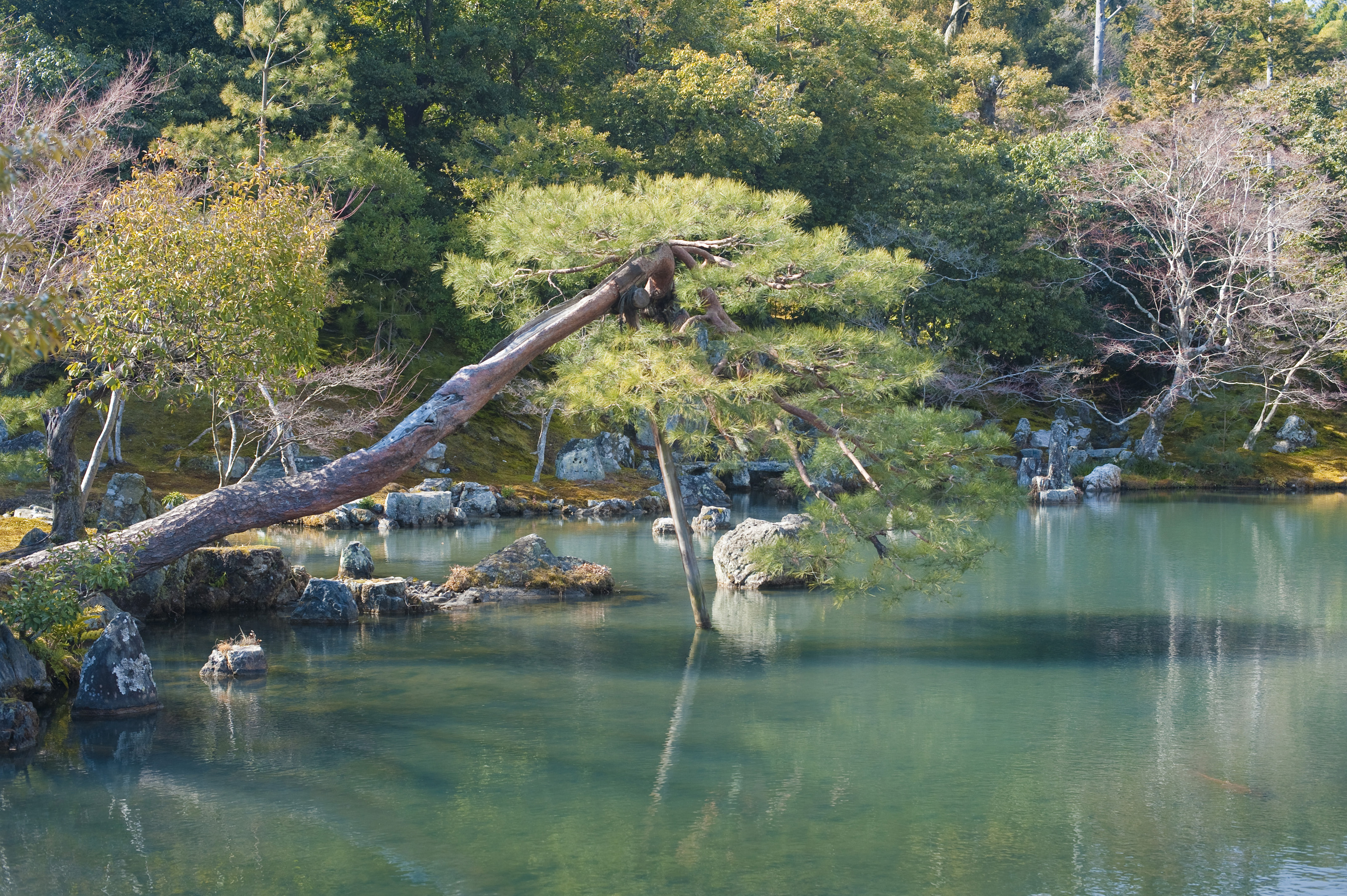 Japanese Garden Pond 5628 Stockarch Free Stock Photos