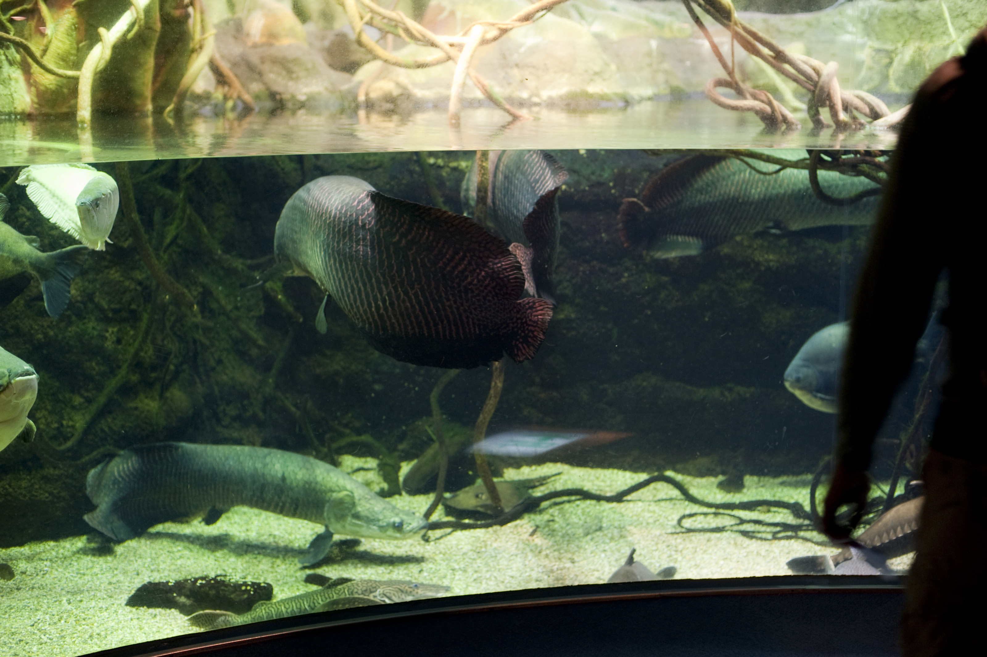Freshwater aquarium fish ecosystem - Accept License And Download Image