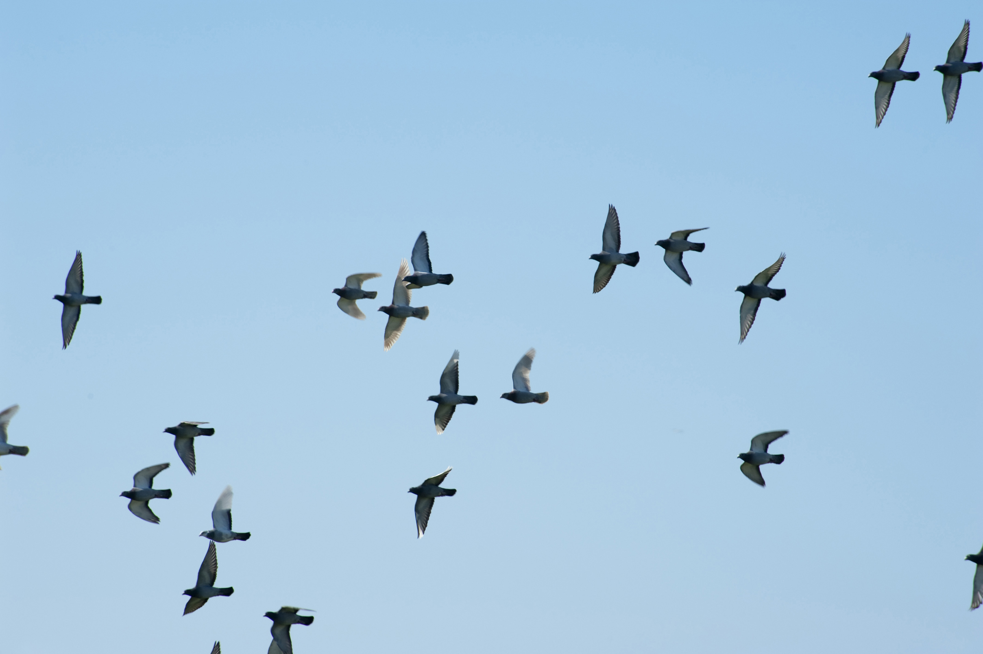 Flying Birds Free Stock Photos Download 3 416 Free Stock: Stockarch Free Stock Photos