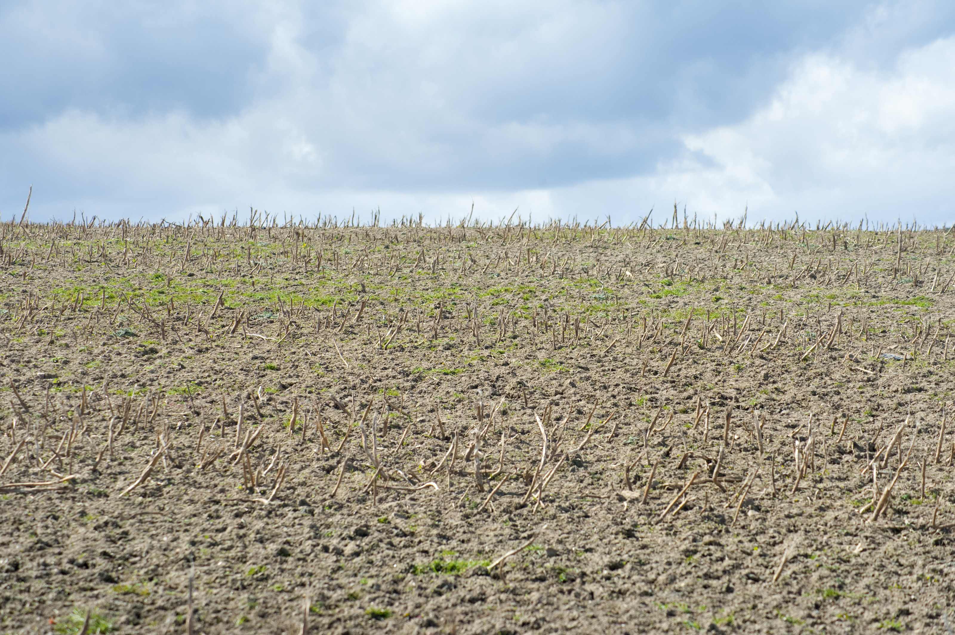 ploughed_field.jpg
