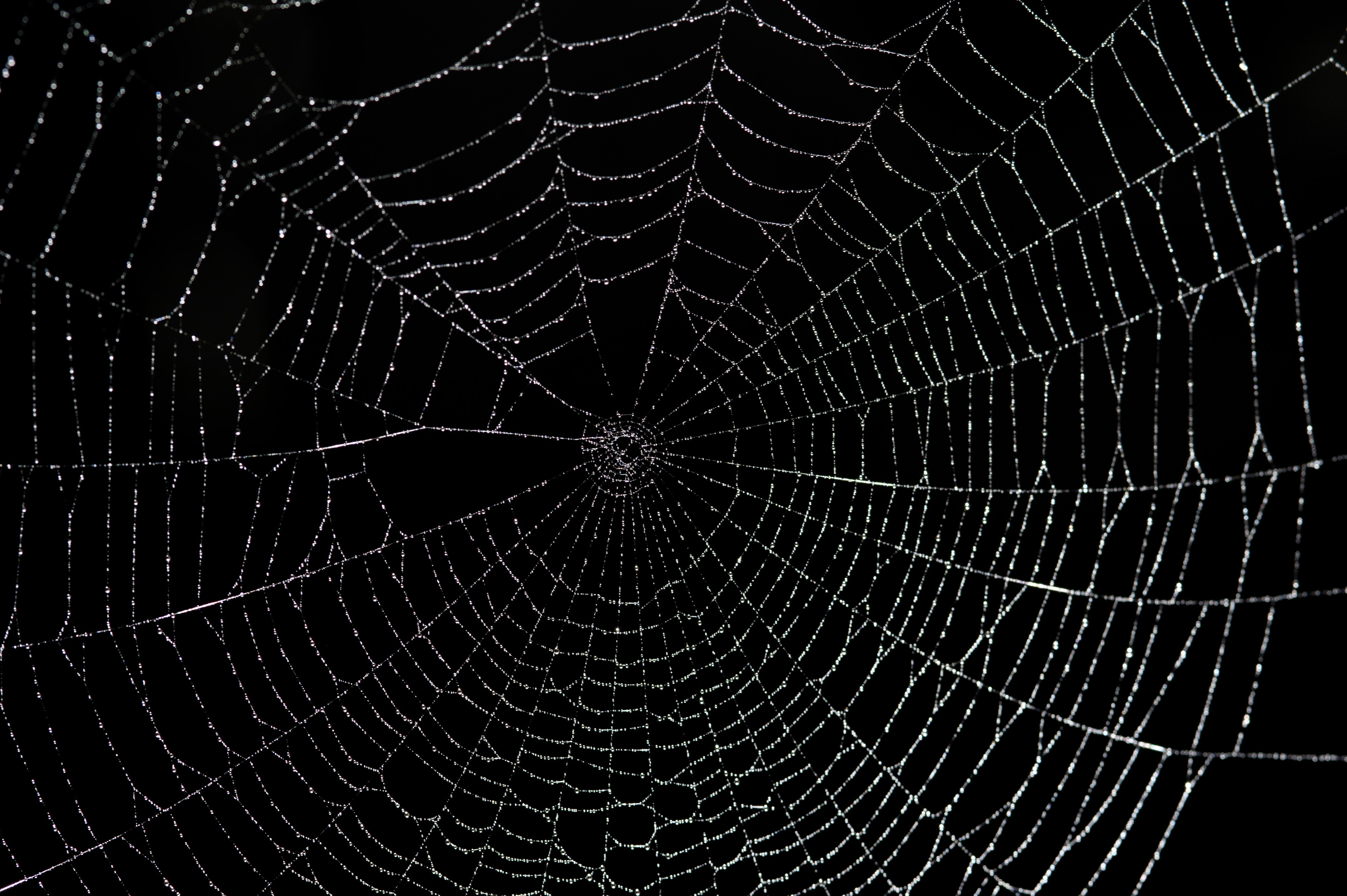 1000+ images about Beautiful Spider Webs on Pinterest ...