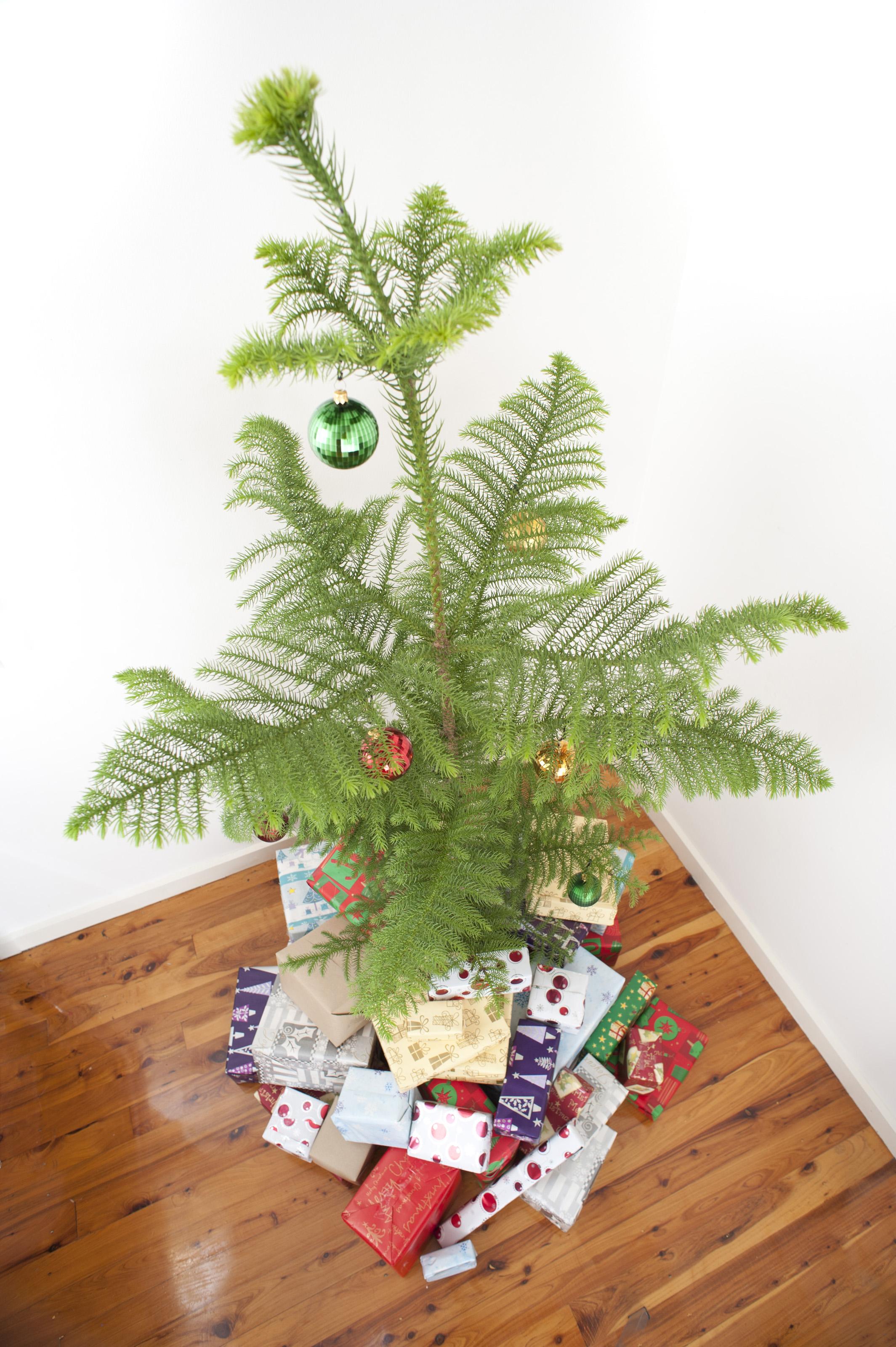high angle christmas tree-8234 | Stockarch Free Stock Photos