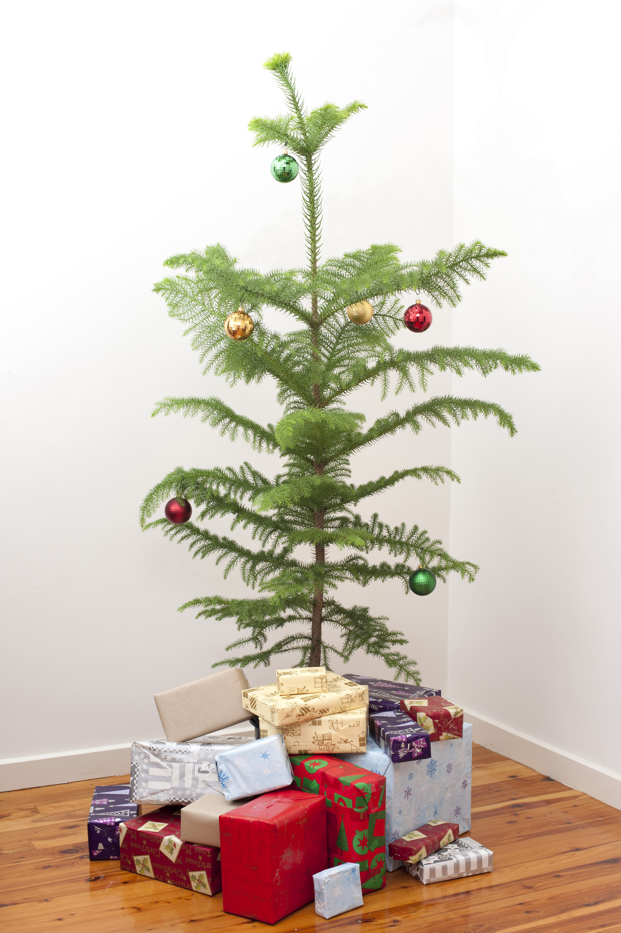 Small christmas tree 8250 stockarch free stock photos for Small designer christmas trees