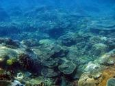 The ocean floor in tropical waters is teeming with corals