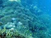 A landscape of hard coral and small reef fish at lady musgrave island