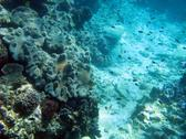 An Underwater Seascape with leather corals and reef fish