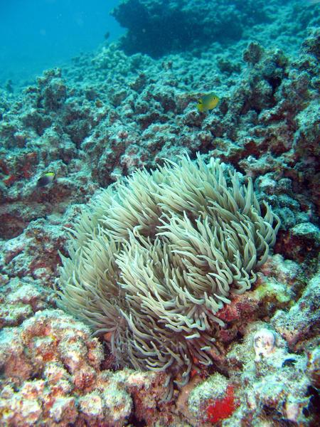 underwater anemone-6128 | Stockarch Free Stock Photos