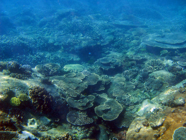 sea floor Notes # _____  sea floor spreading mid ocean ridge  underwater chain of mountains that extends into all the earth's oceans.