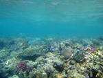 an assortment of colourful corals