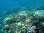 the surface of the ocean floor covered in an assortment of coral types