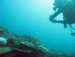a scuba diver exploring the underwater world