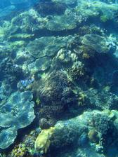 colourful corals growing on the seabed