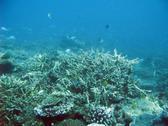 Australias Great Barrier reef teeming with schools of reef fish