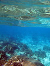 Corals in the shallows, the thin biosphere between the ocean floor and the waters surface