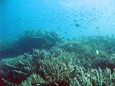 An ocean landscape of corals and schools of reef fish