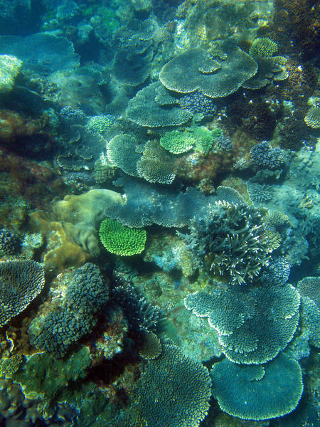 The coral underwater landscape