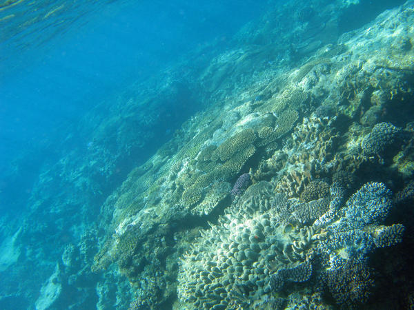 nature coral underwater landscape - photo #44