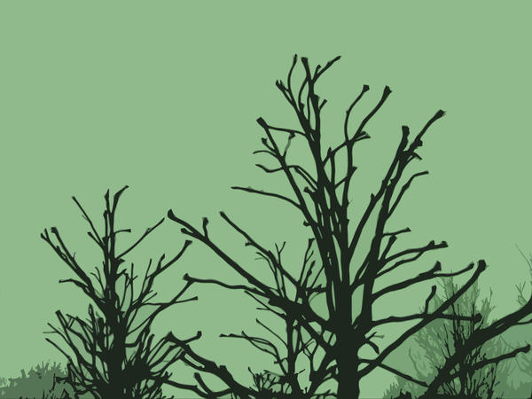 graphic winter tree limbs, stark and lifeless without leaves