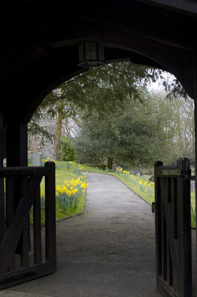 looking through a church litch gate at footpath lined with daffodils