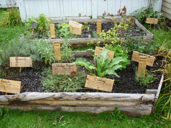 Fresh Herb Selection 3612 | Stockarch Free Stock Photos