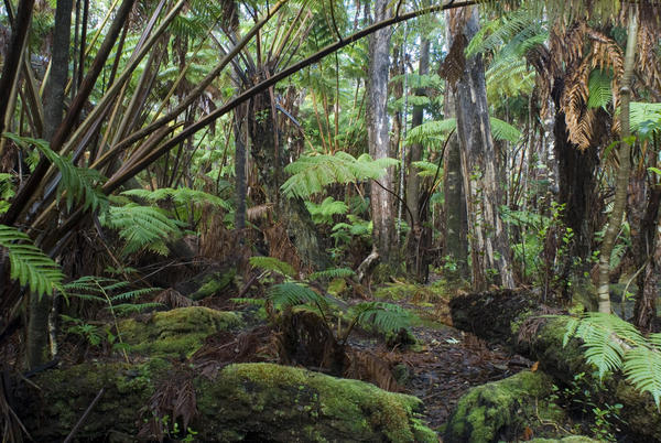hawaiian rainforest plants-4522 | Stockarch Free Stock Photos