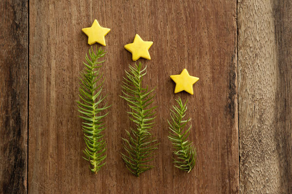 Modern minimalist Christmas tree trio with sprigs of green pine topped with a yellow star arranged in a descending height row on rustic wood with copyspace