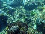 The coral underwater landscape