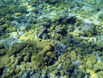 unusual surface of the sea bed covered in corals