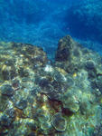 A colourful assortment of corals growing on a reef at keppel island, queensland, australia