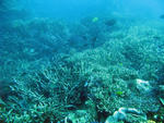 fish and corals living on a coral bommie