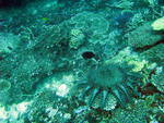 Various types of coral and a crown of thorns sea star