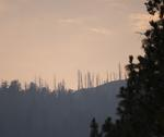 a line of dead trees in silhouette on top of a hill