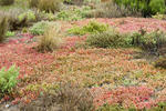 Background of delicately coloured marsh plants in a wetlands habitat